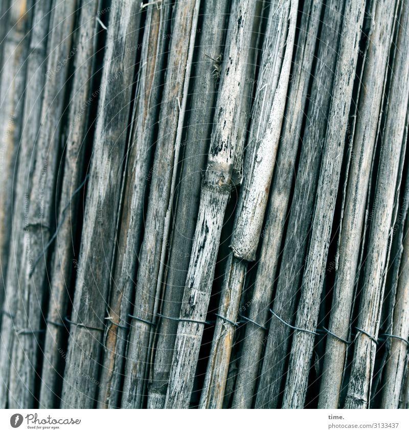 Geschichten vom Zaun (XXVI) Draht Schilfrohr Metall Linie Netzwerk alt dunkel trashig Sicherheit Schutz Zusammensein Müdigkeit Schmerz Endzeitstimmung