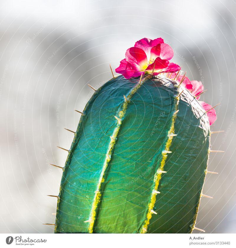 Kaktus mit Blüte | Fingerspitzengefühl exotisch Freude Feste & Feiern Karneval Jahrmarkt Kunst Kunstwerk Veranstaltung Party Pflanze Hut außergewöhnlich