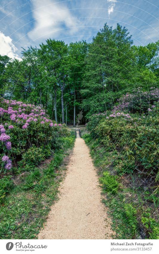Azaleen- und Rhododendronpark in Kromlau, Sachsen Ferien & Urlaub & Reisen Tourismus Garten Natur Landschaft Herbst Baum Blatt Park Wald Felsen Teich See Platz
