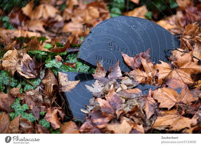 Hier ruht Blatt Efeu Friedhof Grab Stein alt dunkel kaputt braun schwarz friedlich Gelassenheit ruhig demütig Trauer Tod Glaube Religion & Glaube