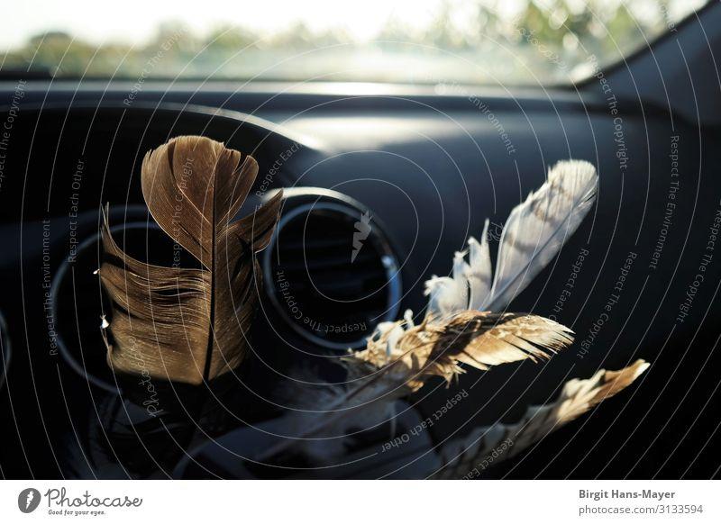 Schutzengelfedern Autofahren PKW Limousine Feder Zeichen Ferien & Urlaub & Reisen natürlich braun grau schwarz Volksglaube Glaube Religion & Glaube Glück
