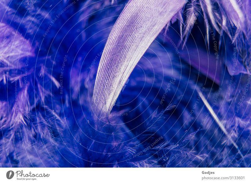 Makroaufnahme einer vieler Federn einer Federboa | Fingerspitzengefühl Mode kuschlig violett silber weiß Warmherzigkeit stagnierend Surrealismus Bekleidung