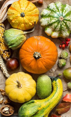 grün Blatt dunkel Herbst gelb natürlich Menschengruppe frisch Gemüse Jahreszeiten Bauernhof Ernte Vegetarische Ernährung reif Ackerbau Beeren