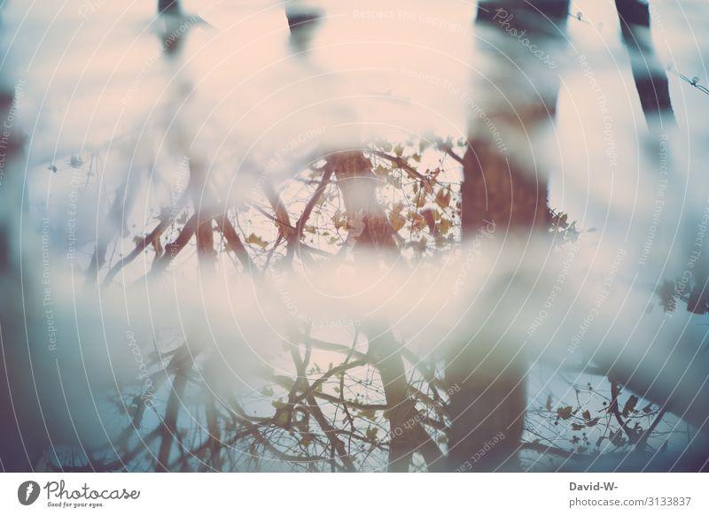 Bäume spiegeln sich im Wasser Spiegelung See Pfütze Blätter äste Äste und Zweige nachdenklich Vergangenheit melancholisch Verfall Natur Naturphänomene