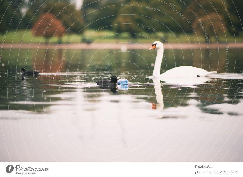 Plastikflasche schwimmt mit Enten und Schwan auf dem See   gefangen in Plastik Umweltverschmutzung Müll Wasser schwimmen Nachhaltigkeit Natur Problematik