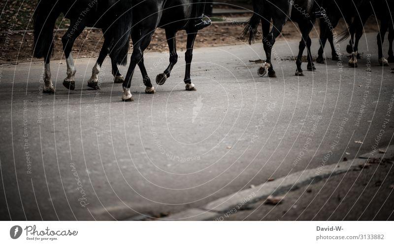 unterwegs mit dem Pferd durch die Stadt Pferde Reiter reiten stadt Beton dünster ungesund Hufeisen beschlagen grau Tier Reiten Außenaufnahme Mensch Nutztier