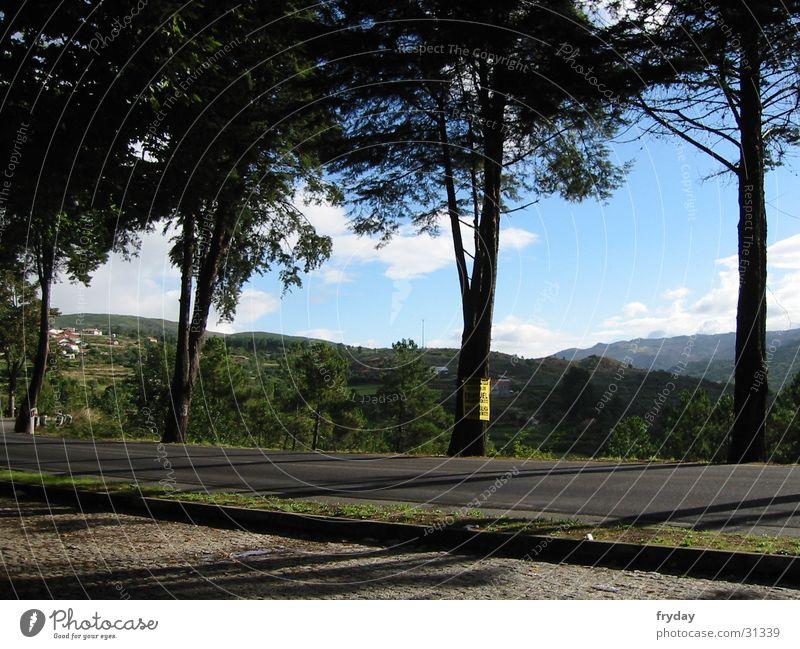rast und ruh Baum Europa Pause Aussicht Parkplatz Portugal