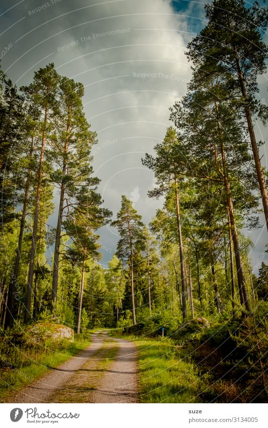 Wirtschaftsweg Ferien & Urlaub & Reisen Natur Pflanze grün Landschaft ruhig Wald Gesundheit Umwelt natürlich Wege & Pfade Freiheit braun Ausflug wandern