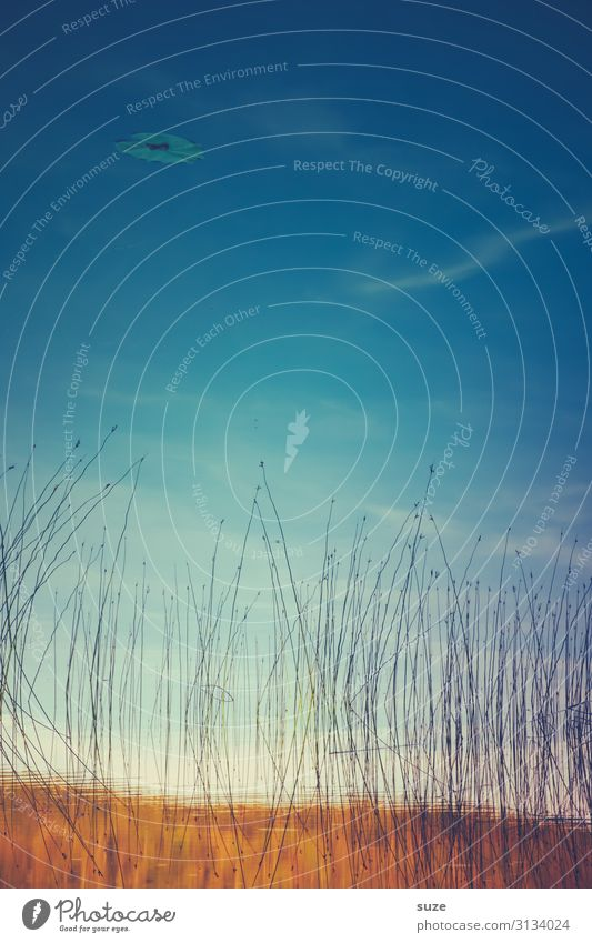 Blaue Luft schön Leben Zufriedenheit ruhig Meditation Umwelt Natur Landschaft Wasser Himmel Herbst Wetter Seeufer Teich ästhetisch frei blau Stimmung Romantik