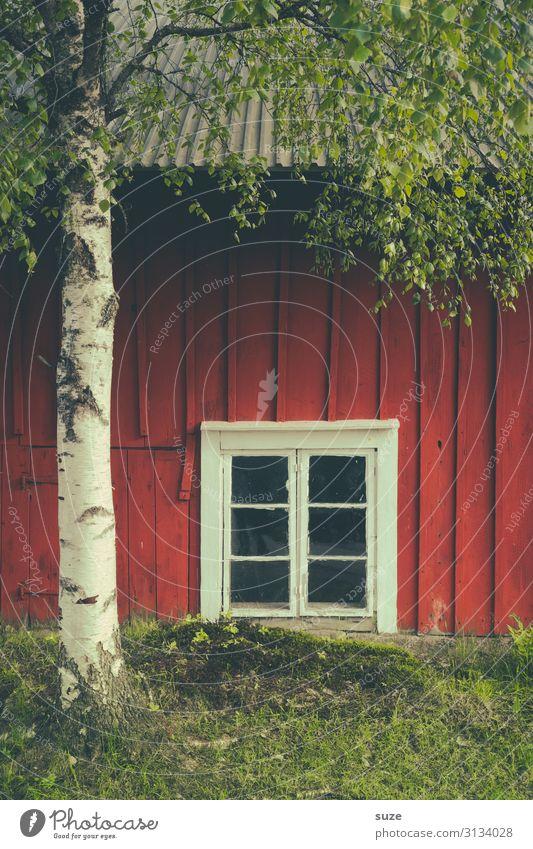 Bodenständiger Ausblick Ferien & Urlaub & Reisen Haus Umwelt Natur Baum Wiese Fassade Fenster authentisch grün rot Stimmung Einsamkeit Idylle Birke Baumstamm