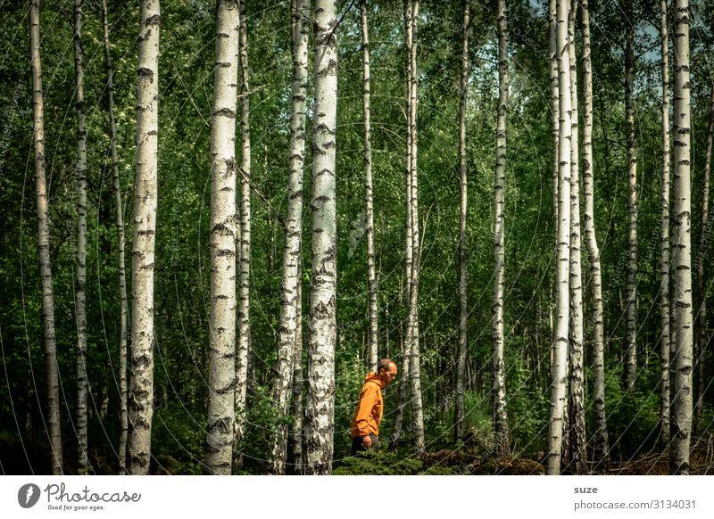 Pfadfinder Mensch Ferien & Urlaub & Reisen Natur Mann Sommer Pflanze grün Landschaft Wald Hintergrundbild Umwelt natürlich wild wandern Wachstum Klima