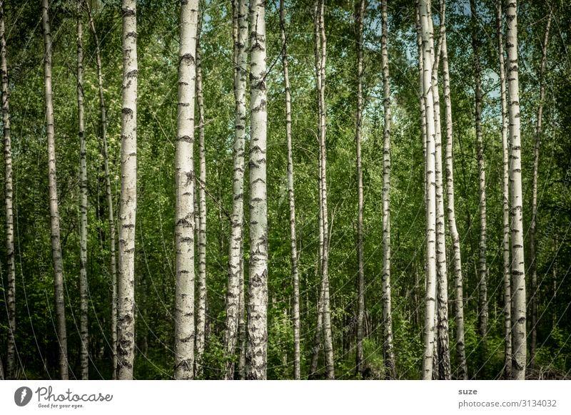 Pfadsuche Ferien & Urlaub & Reisen Natur Sommer Pflanze grün Landschaft ruhig Wald Gesundheit Hintergrundbild Umwelt natürlich wild Wachstum authentisch Klima
