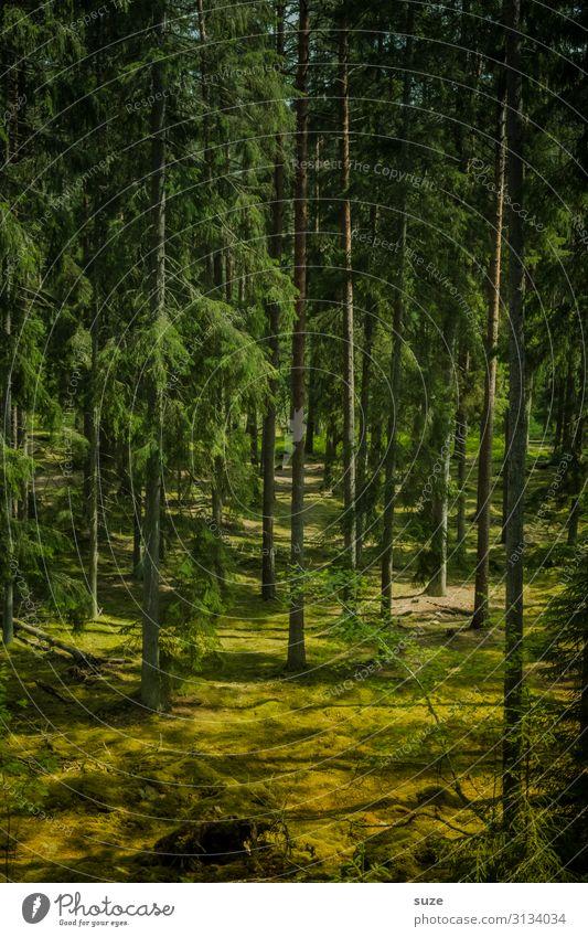 Waldesruh Ferien & Urlaub & Reisen Natur Sommer Pflanze grün Landschaft ruhig Gesundheit Umwelt Freiheit Ausflug wandern Abenteuer Klima Wellness