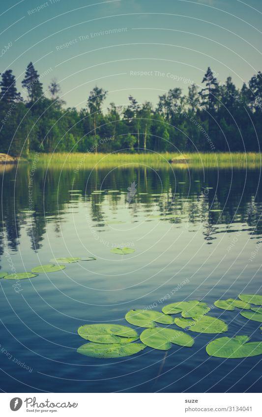 Badezusatz Gesundheit Wohlgefühl ruhig Ferien & Urlaub & Reisen Freiheit Sommer Sommerurlaub Umwelt Natur Landschaft Pflanze Wasser Klima Gras Blatt Wildpflanze