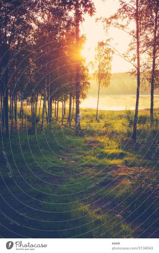 Freudestrahlend Mensch Ferien & Urlaub & Reisen Natur Sommer Pflanze grün Landschaft ruhig Wald Gesundheit Umwelt Freiheit See Ausflug Wachstum Abenteuer