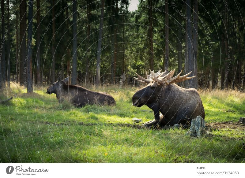 Test-Test ... harmonisch Wohlgefühl Ausflug Abenteuer Freiheit Sommer wandern Umwelt Natur Landschaft Pflanze Klima Park Wiese Wald Wildtier 2 Tier Tierpaar