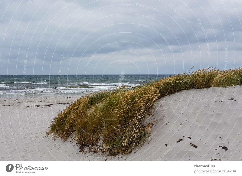 Düne mit Meer Ferien & Urlaub & Reisen Ausflug Ferne Freiheit Sommer Strand Wellen Stranddüne Strandhafer Umwelt Natur Landschaft Sand Luft Wasser Erde Himmel