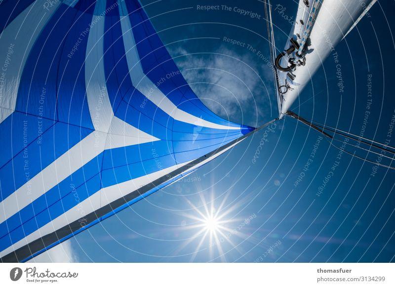 Spinnaker Segel Himmel Sonne Freizeit & Hobby Ferien & Urlaub & Reisen Abenteuer Ferne Sommer Meer Sport Wassersport Segeln Wolkenloser Himmel Schönes Wetter
