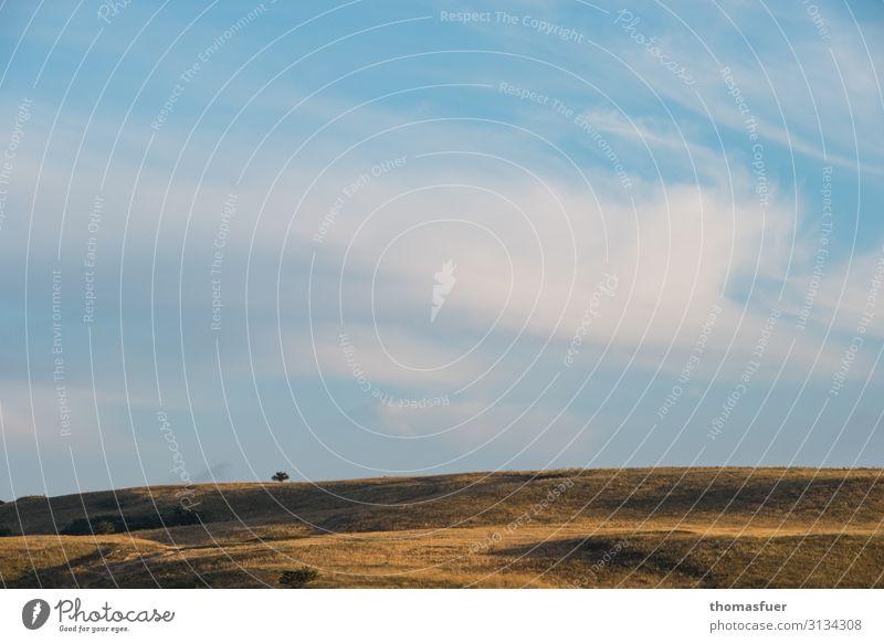 weites verdorrtes Feld mit einem Baum Ferien & Urlaub & Reisen Ferne Sommer Sonne Natur Landschaft Himmel Wolken Horizont Schönes Wetter Wind Gras Wiese Hügel