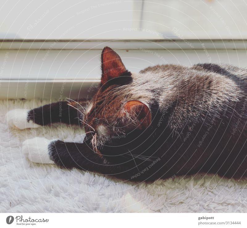 Lizzy hält ein Mittagsschläfchen Tier Haustier Hund 1 genießen liegen schlafen tragen kuschlig niedlich schwarz Erholung Häusliches Leben Zufriedenheit