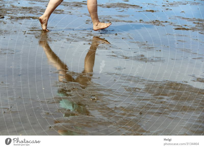Detailaufnahme Beine im Wattenmeer mit Spiegelung im Wasser Mensch feminin Fuß 1 30-45 Jahre Erwachsene Umwelt Natur Landschaft Erde Sommer Schönes Wetter Küste