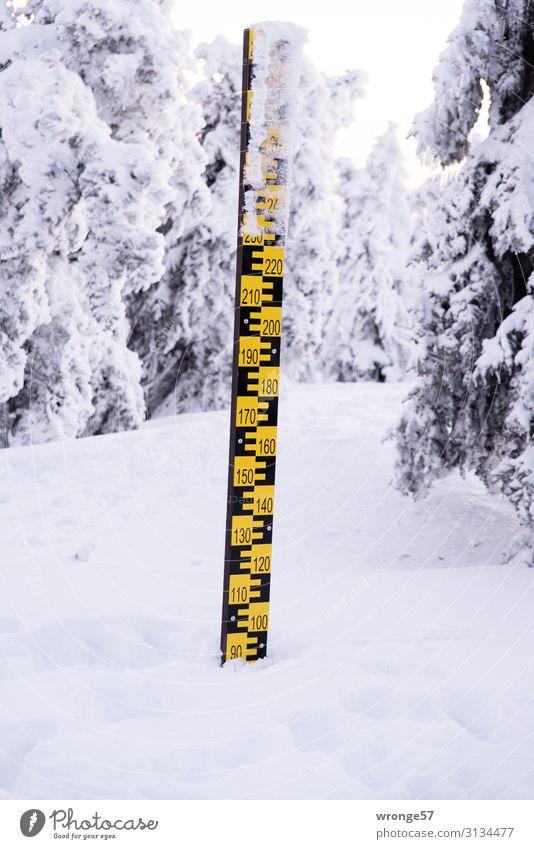 Brockengipfel im Winter VII Landschaft Schönes Wetter Eis Frost Schnee Baum Berge u. Gebirge Schneebedeckte Gipfel hoch kalt Harz Winterwald Schneelandschaft
