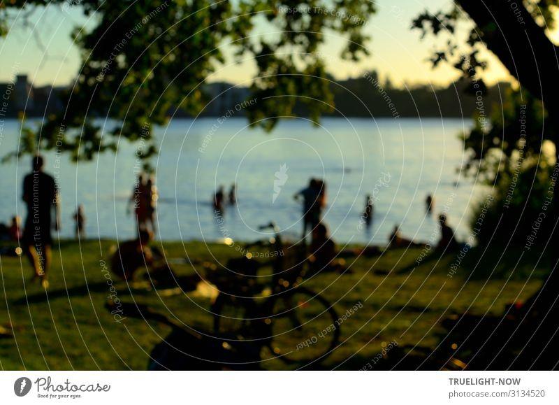 Sommerabend am Fluss Freude Glück Gesundheit Wellness harmonisch Wohlgefühl Erholung Schwimmen & Baden Freizeit & Hobby Ferien & Urlaub & Reisen Ausflug