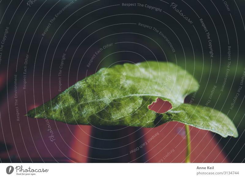 Das Blatt Umwelt Landschaft Pflanze Tier Wildpflanze Wiese grün rot Farbfoto Außenaufnahme Tag Sonnenlicht Schwache Tiefenschärfe Vogelperspektive
