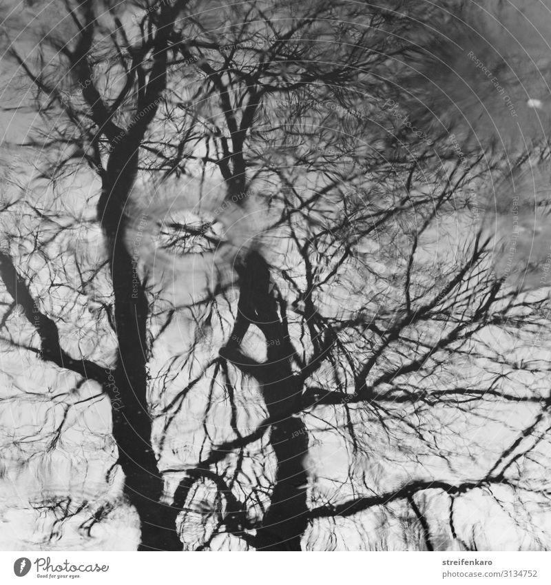 Spiegelung eines Baumes ohne Blätter auf einer Wasseroberfläche, mit Regentropfen Umwelt Natur Pflanze Urelemente Wassertropfen Herbst Pfütze Holz alt dunkel