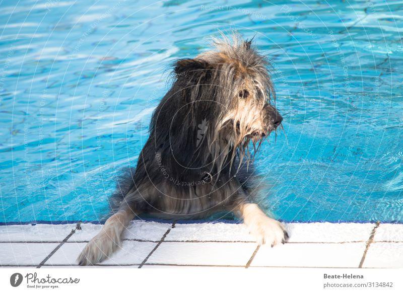 Badewetter war gestern Lifestyle Schwimmbad Schwimmen & Baden Sport Wasser Sommer Schönes Wetter Wärme Hund Fell beobachten Erholung Fitness genießen Blick