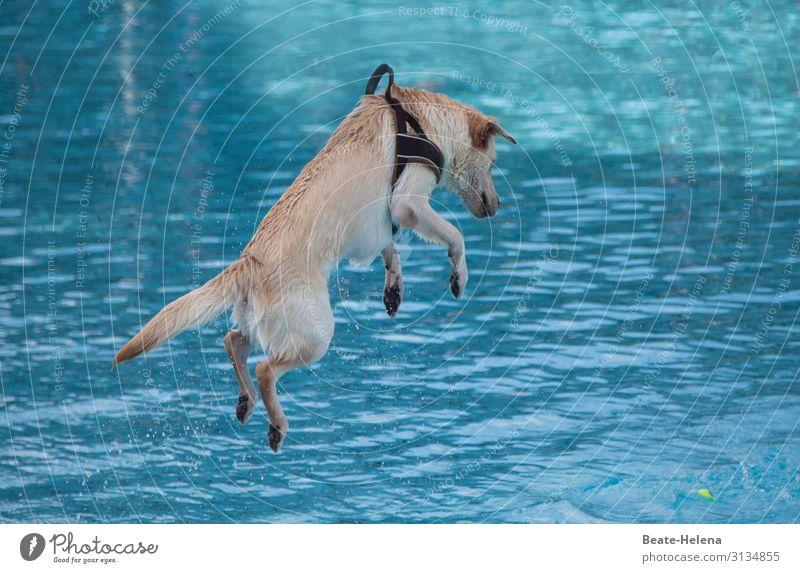 springender Hund elegant Freude Gesundheit sportlich Fitness Wohlgefühl Zufriedenheit Freizeit & Hobby Sommer Sonne Sport Sport-Training Wassersport