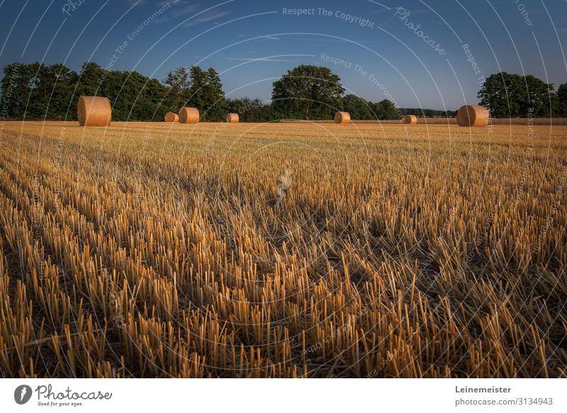 Erntezeit Umwelt Natur Landschaft Schönes Wetter Nutzpflanze Feld Hannover Deutschland Wärme Stroh Strohballen Ackerbau Rasen Stoppelfeld Abend Landwirtschaft
