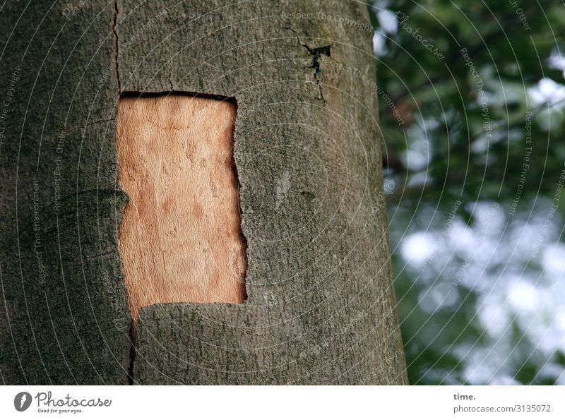 Schnittwunde | Hautsache Natur Baum Wald Umwelt außergewöhnlich Schönes Wetter Neugier entdecken Zusammenhalt Baumstamm Überraschung Konzentration Wachsamkeit