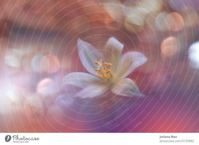 Schöne Natur Makrofotografie.Web Banner für Design.Art. Lifestyle Reichtum Kunst Kunstwerk Umwelt Pflanze Blume Blühend orange weiß Duft Energie Farbe
