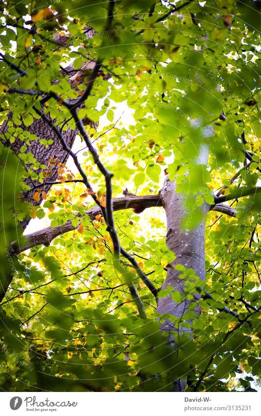 hoch oben im Baum Kunst Kunstwerk Gemälde Umwelt Natur Landschaft Sommer Klima Klimawandel Schönes Wetter Pflanze Wald Tier Wildtier Fell Pfote 1 beobachten