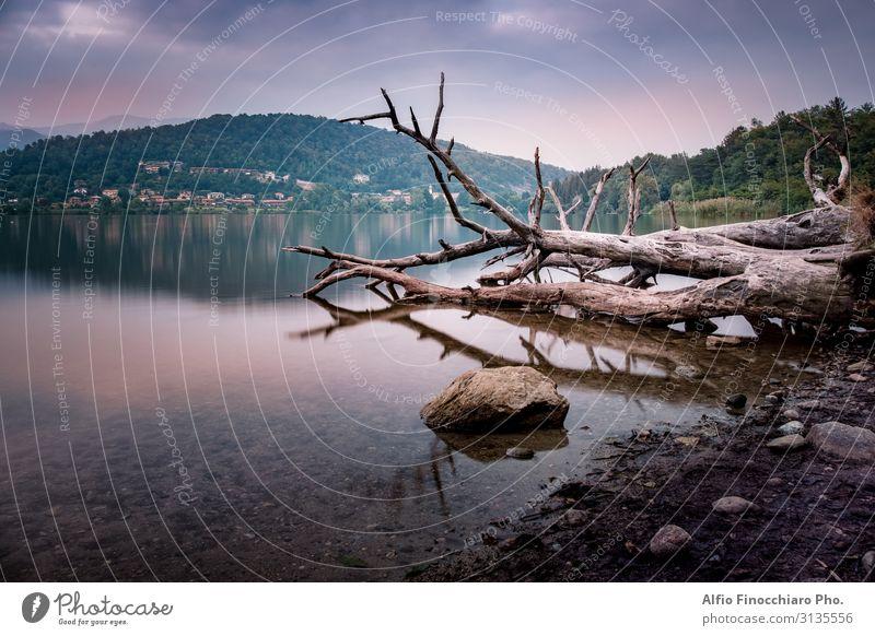 Tote Bäume über dem ruhigen See schön Ferien & Urlaub & Reisen Tourismus Sommer Meer Winter Spiegel Umwelt Natur Landschaft Pflanze Himmel Wolken Horizont Baum