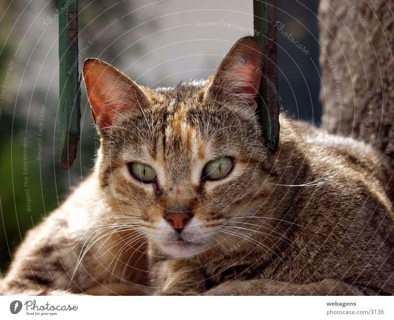 Katze am Gitter Katze Zaun Gitter