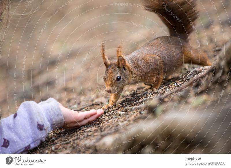 Eichhörnchen füttern #5 Essen Ferien & Urlaub & Reisen Ausflug Kind Mensch Mädchen Hand 3-8 Jahre Kindheit Natur Tier Wald Wildtier 1 Fressen sitzen warten