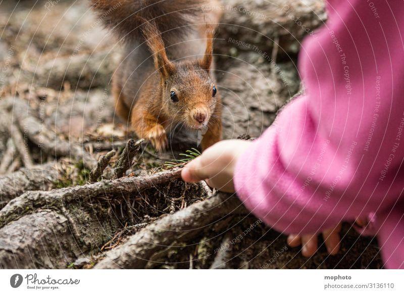 Eichhörnchen füttern #6 Essen Ferien & Urlaub & Reisen Ausflug Kind Mensch Mädchen Hand 1 3-8 Jahre Kindheit Natur Tier Frühling Wald Wildtier Fressen sitzen
