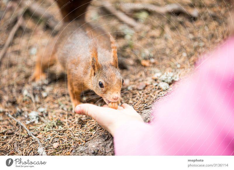 Eichhörnchen füttern #7 Haselnuss Essen Ferien & Urlaub & Reisen Tourismus Ausflug Kind Mensch Mädchen Kindheit Hand 1 3-8 Jahre Natur Tier Wald Wildtier