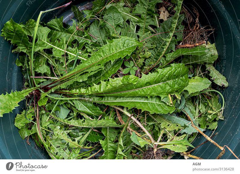 Unkraut oder Salat Leben Freizeit & Hobby Sommer Garten Mensch Natur Pflanze Blatt Wildpflanze Arbeit & Erwerbstätigkeit Reinigen Wachstum natürlich grün