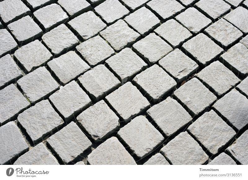 Ein Netz auf dem Boden Wege & Pfade Stein Linie liegen ästhetisch eckig grau Platz hart Pflastersteine Farbfoto Außenaufnahme Muster Menschenleer Tag