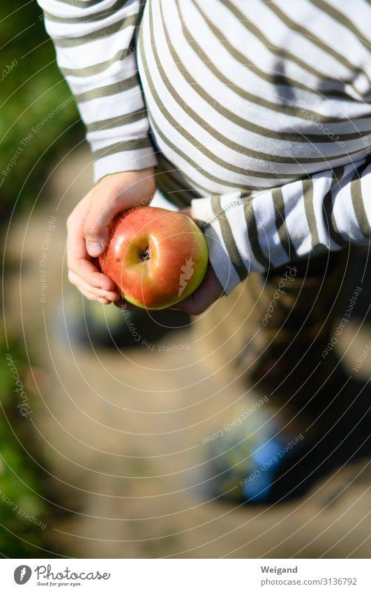 Apfelglück Lebensmittel Frucht Ernährung Picknick Bioprodukte Vegetarische Ernährung Diät Slowfood Kindergarten 1 Mensch Umwelt Natur Essen rot Ernte finden