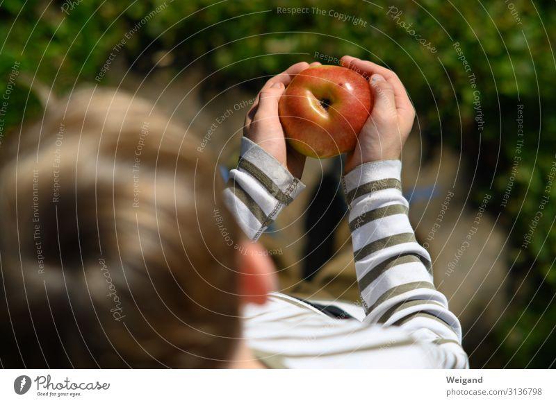 Apfelglück Lebensmittel Frucht Ernährung Essen Bioprodukte Vegetarische Ernährung Slowfood Kindererziehung Kindergarten lernen Kleinkind Kindheit 1 Mensch