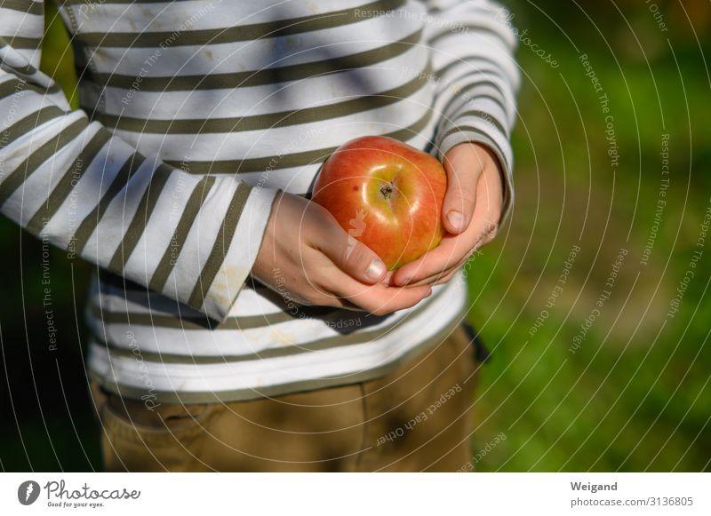 Apfel Ernährung Essen Bioprodukte Vegetarische Ernährung Gesundheit Fitness Duft Erntedankfest Junge 3-8 Jahre Kind Kindheit 8-13 Jahre frisch Slowfood Frucht