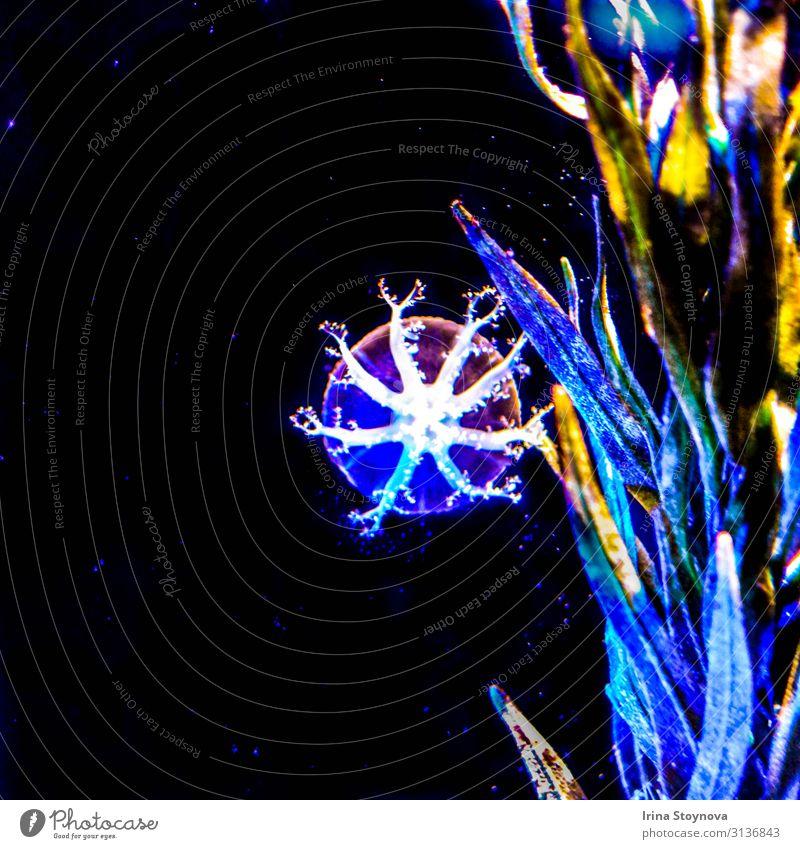 Quallen Natur Pflanze Tier Wasser exotisch Meer Stimmung Klima unter Wasser dunkel mehrfarbig Unterwasseraufnahme Menschenleer Hintergrund neutral Kunstlicht