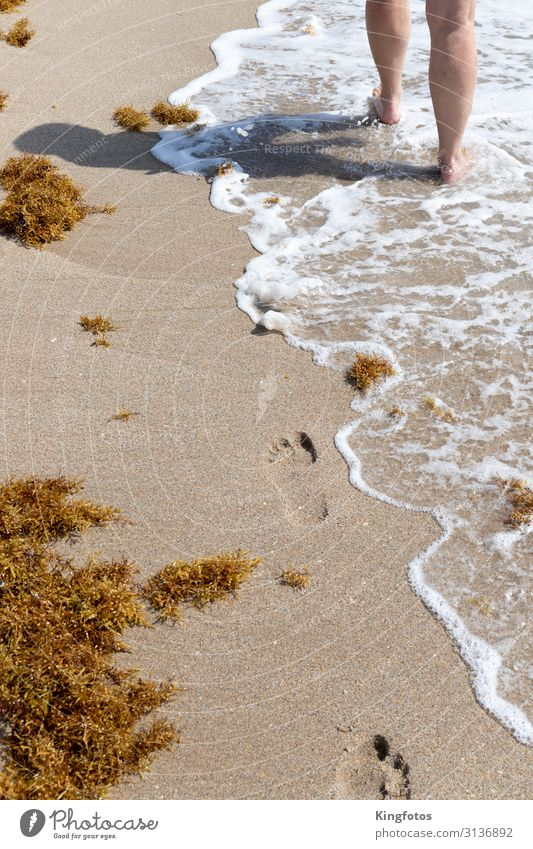Strandspaziergang Ferien & Urlaub & Reisen Ausflug Sommer Sommerurlaub Sonne Meer Wellen Mensch Beine 1 Umwelt Natur Sand Wasser Küste Seeufer Fußspur gehen