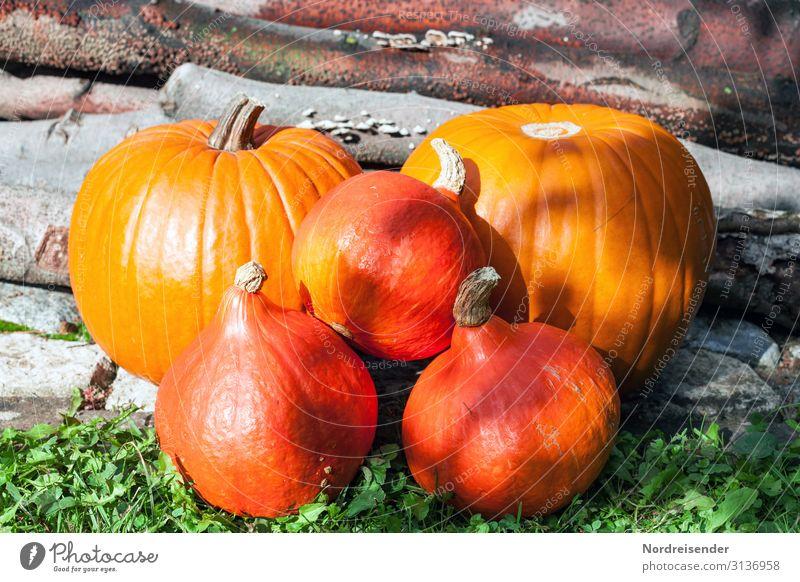 Kürbiszeit Lebensmittel Gemüse Frucht Ernährung Bioprodukte Vegetarische Ernährung Garten Feste & Feiern Erntedankfest Halloween Landwirtschaft Forstwirtschaft