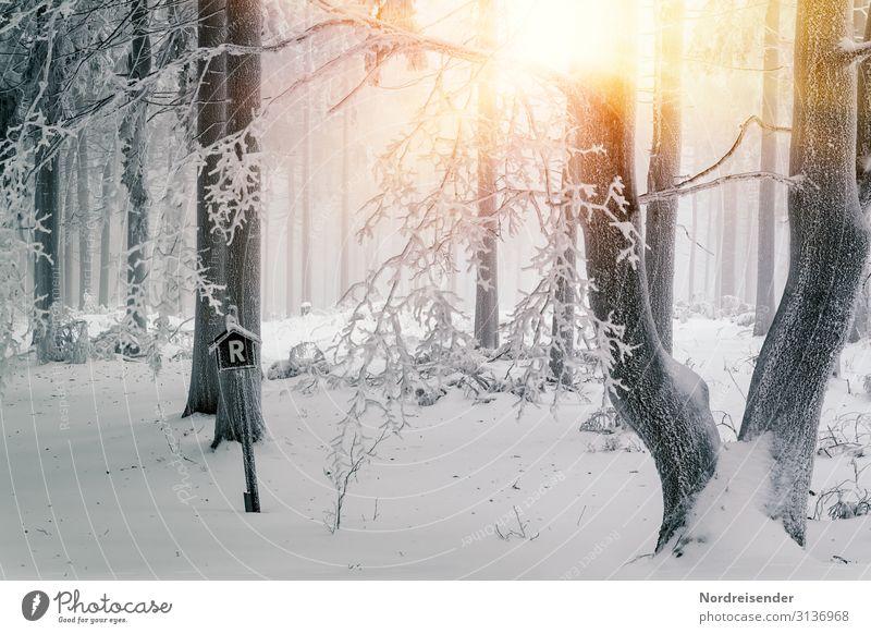 Winter am Rennsteig Ferien & Urlaub & Reisen Tourismus Ausflug Schnee Winterurlaub Natur Landschaft Urelemente Sonne Klima Schönes Wetter Nebel Eis Frost Baum