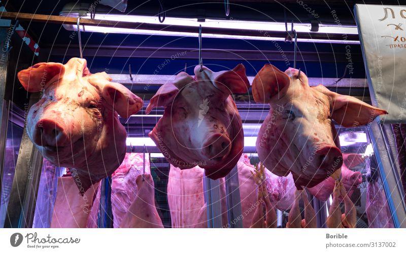 Heads up! Lebensmittel Fleisch Wurstwaren Ernährung Gesundheit Gesunde Ernährung Fitness Tier Nutztier Totes Tier Schwein Schweinekopf Schweinefleisch 3 kaufen